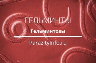 Гельминтозы